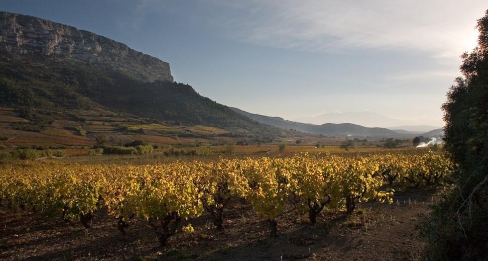 Tautavel vin Gardies Cazes Roussillon