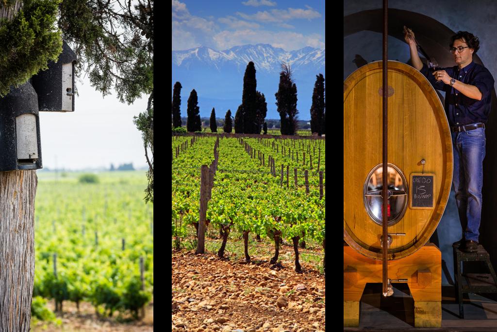 roussillon domaine viticole vin bio biodynamie