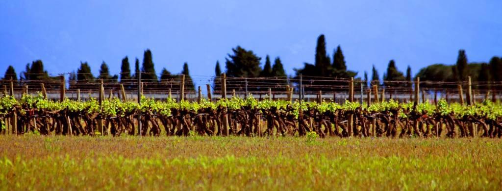 biodynamie domaine viticole 66 cazes