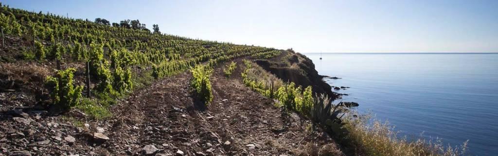 randonnée sentier paulilles vignoble