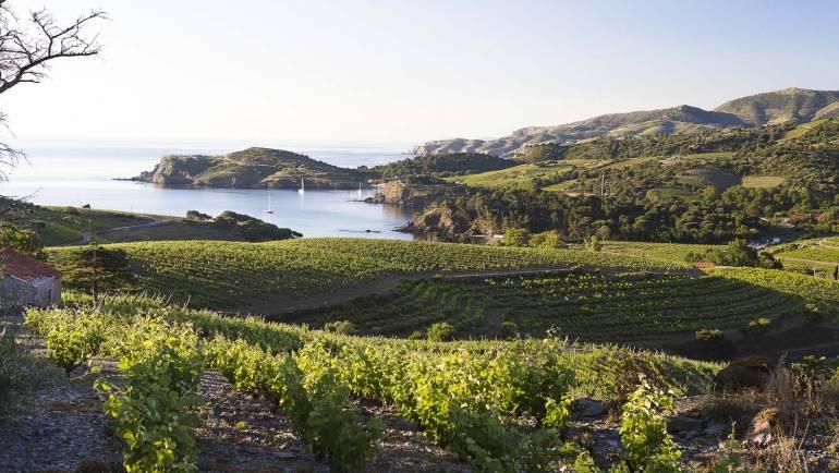 Évadez-vous au coeur du vignoble des Clos de Paulilles